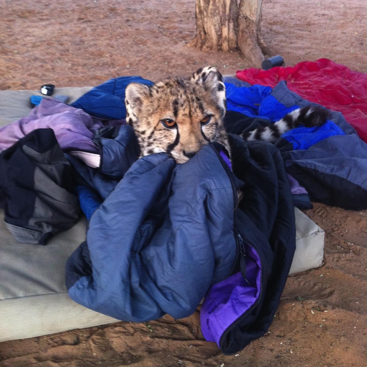 Im Schlafsack mit einem Geparden
