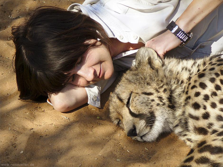 Namibia - Reisen - Wildlife - Geparden