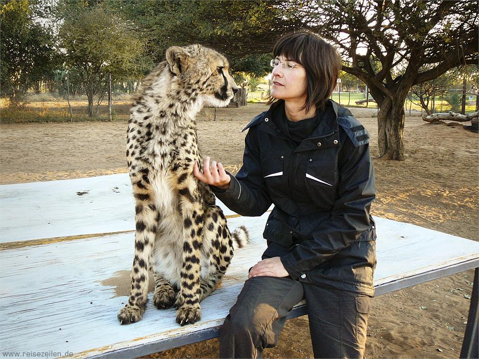 Namibia - Reisen - Wildlife - Gepard Atheno