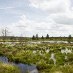 Wandern in Belgien [Hohes Venn] – Wasser in seiner schönsten Form