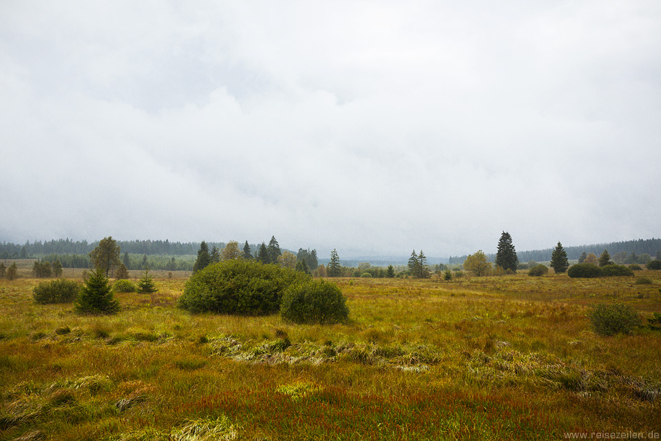 Belgien - Wandern - Hohes Venn - Reisen - Reisetipps - Ausflugtipss - Hochmoor - Moor
