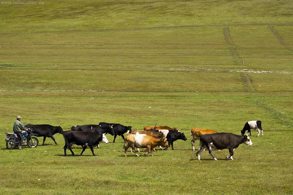 Bilder Mongolei Bildergalerie Nomaden Viehtrieb