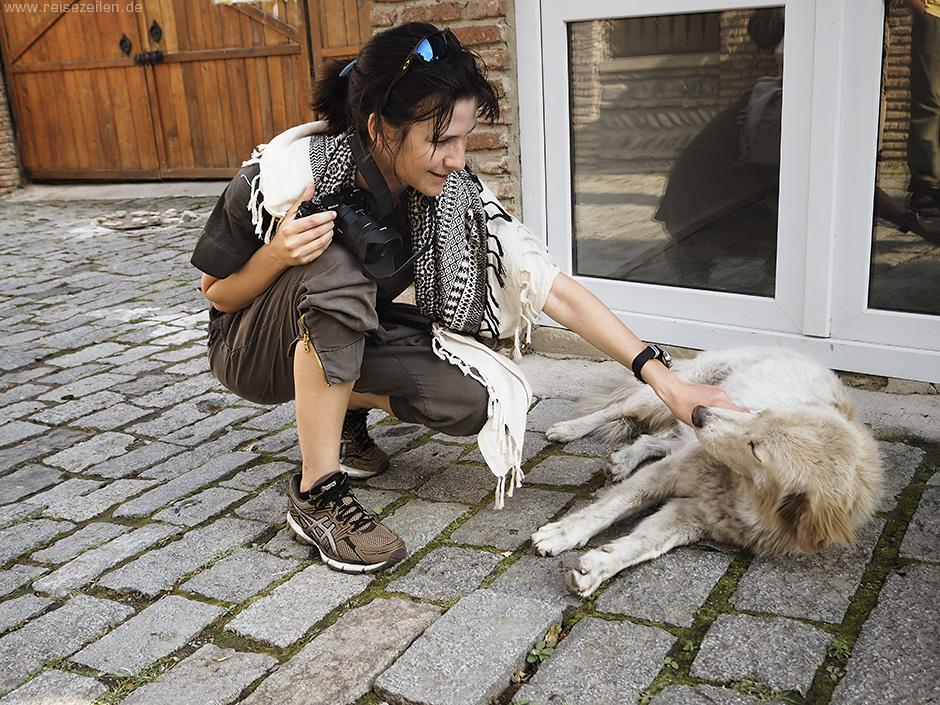 Wie gefährlich ist es, Straßenhunde anzufassen - Tollwut - Tollwutgefahr - Tollwutimpfung