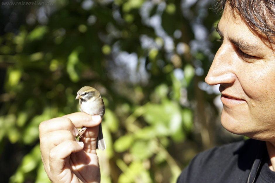 Israel Eilat Vogelbeobachtung