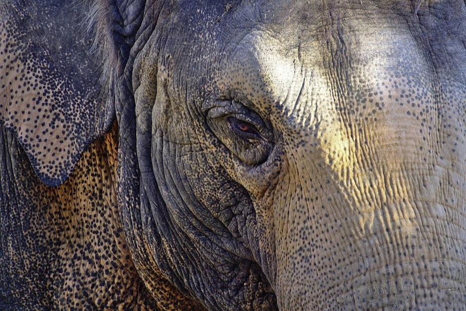 Elefantenschutz