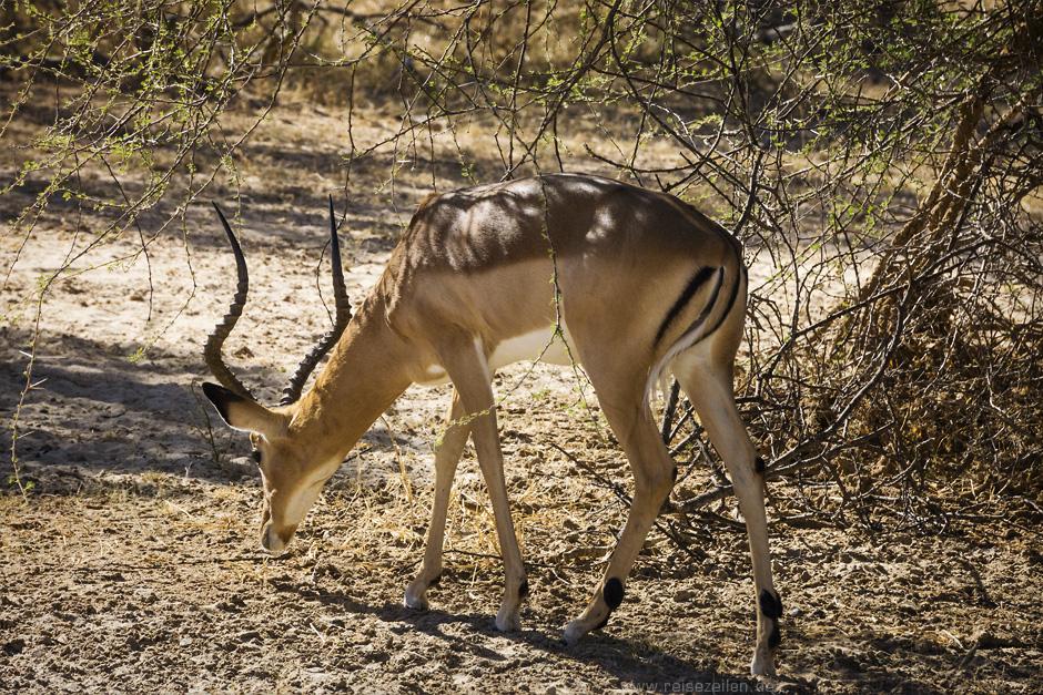Afrika Botswana Safari