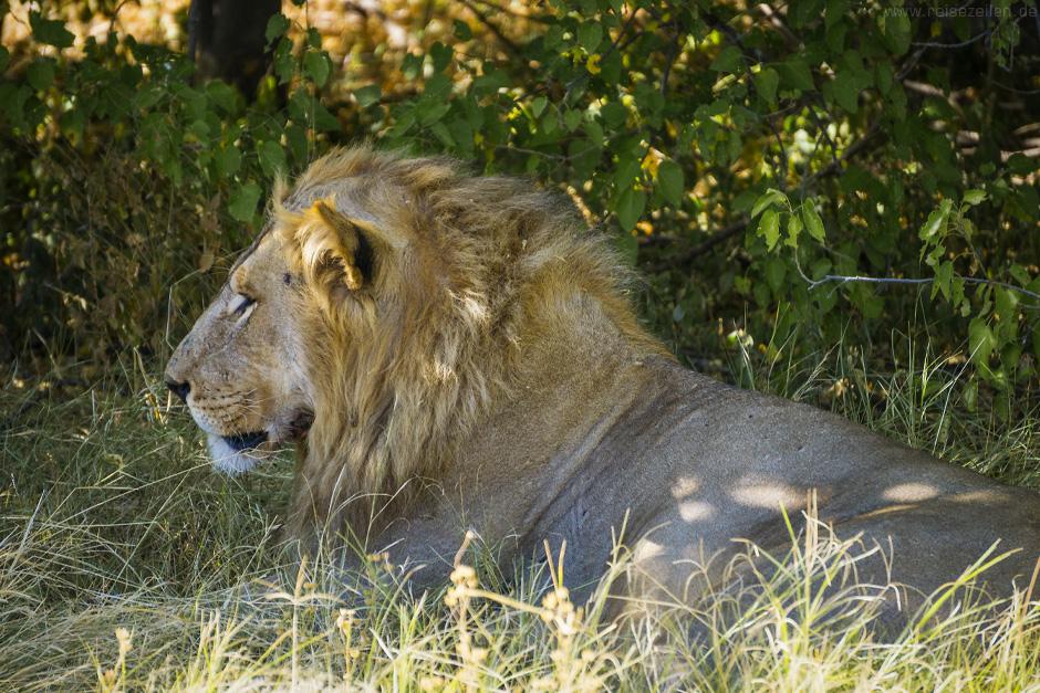 tipps safari afrika