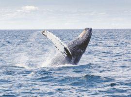Walbeobachtung Kriterien