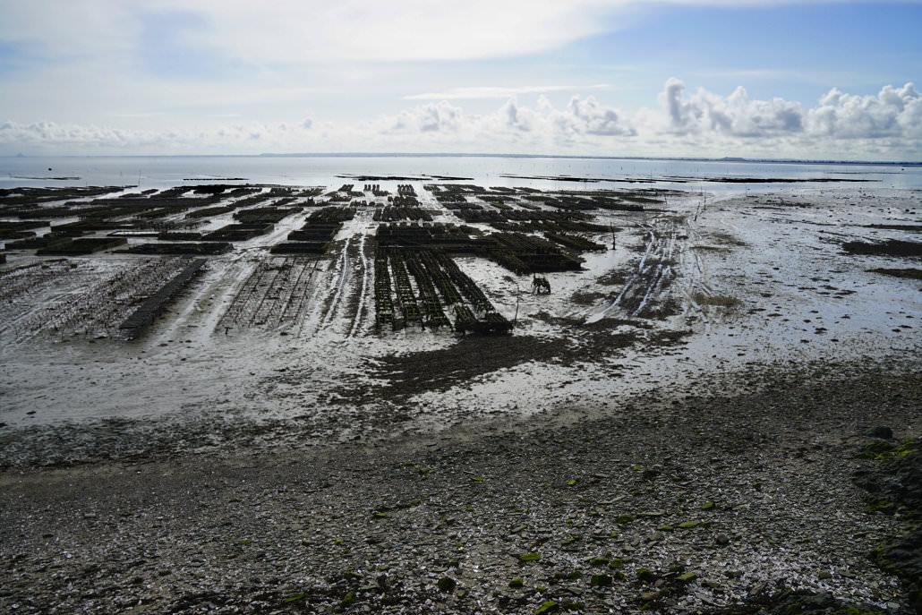 Austernzucht in der Bretagne