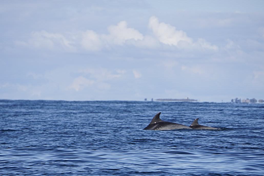 Delphine in der Bretagne