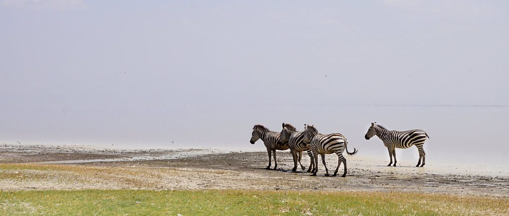 Safari Afrika Kosten