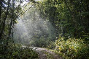 Ein mystischer Urwald beim Urlaub in Deutschland