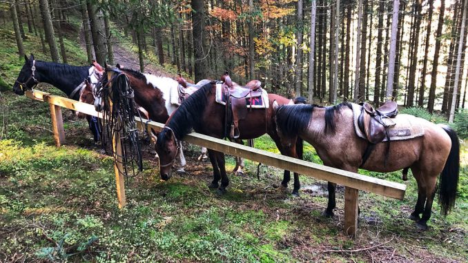 Wanderreiten in Oberösterreich